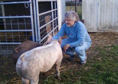 Pigs... love 'em!